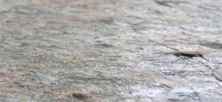 Каменный шпон Leaf Stone Классический Auro